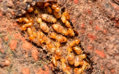 5 Tips to Reduce the Chances of Termite Infestation