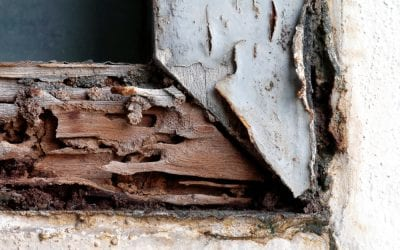 The Importance of Pre Purchase Termite Inspections