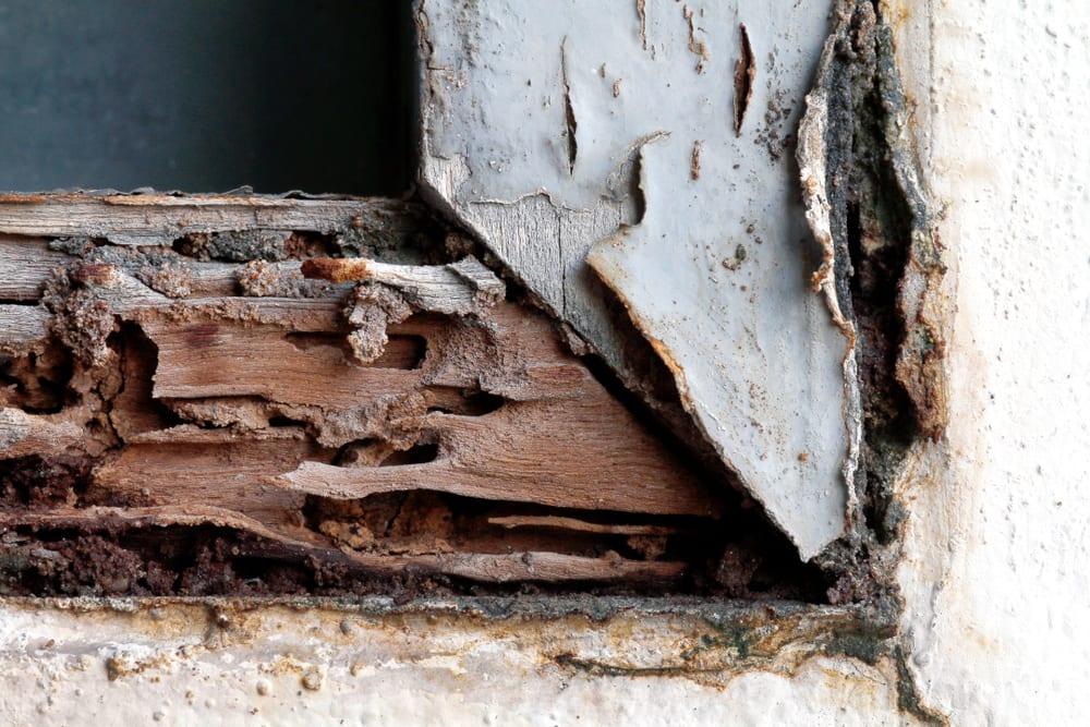 Termite damage on window seal.