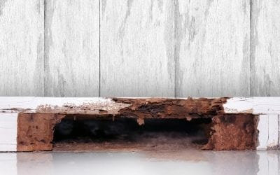 5 Signs You May Have Termites in your Home