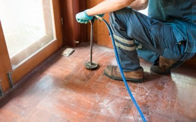 Is Termite Control Safe for your Family and Pets?