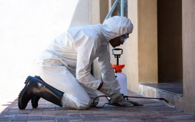 Tips to Prevent Pests in Your Restaurant