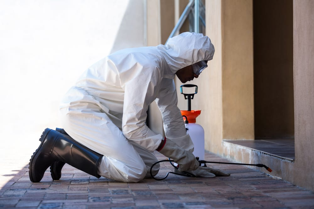 Male pest control worker spraying chemicals around establishment.