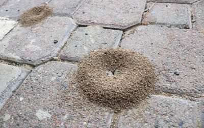 Sick of Dealing with Never-Ending Ant Infestations?