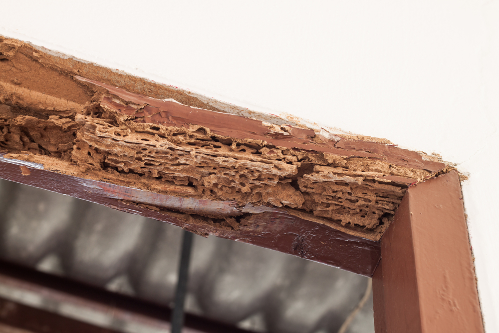 What Can Happen with Untreated Termite Infestations?