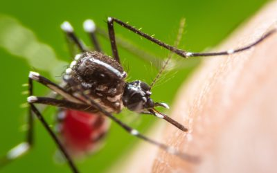 Prevent Mosquitoes from Breeding in Your Yard