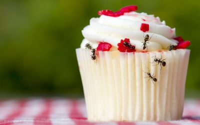 These Habits May Be Attracting Ants to Your Home
